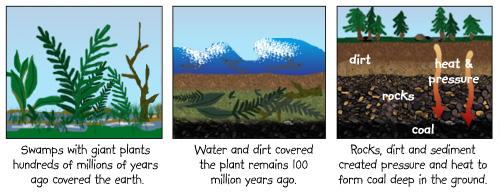 Kids Korner - How Coal is Formed